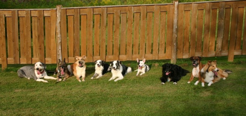 Groulx Furry Family Past and Present and Extended Family Groulx Furry Family Past and Present and Extended Family Winston - Cujo - Dean - Viza -Zepplin - Creature - Rudi - Knikko - Neela Dog Agility Team Canada - GUS Custom Creations - Canadian Frizzers